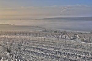 Blick von der Weinlage Kelterberg in Höhnstedt Richtung Mansfelder Land (c) Jörn-Uwe Zeug